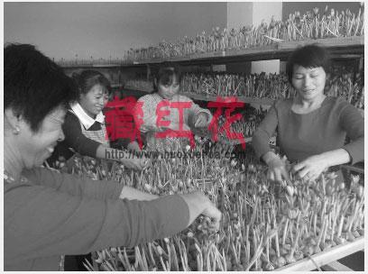 伊朗藏红花与国内藏红花的区别 为什么进口藏红花价格高