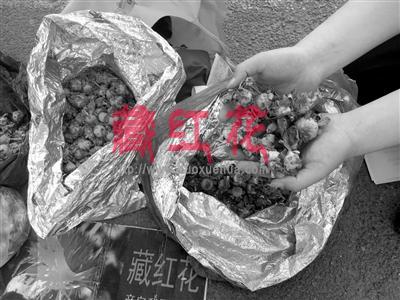 红花冒充藏红花卖被抓