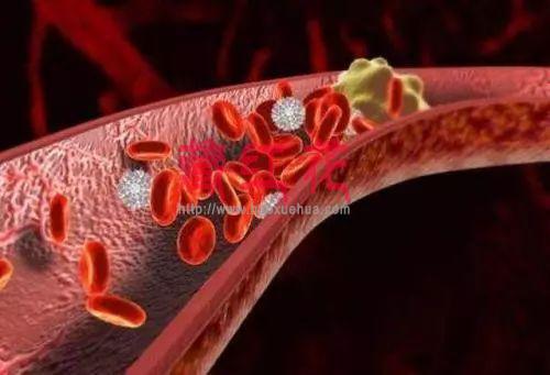 血栓斑块清理的良药,本草纲目记载的珍贵药食同源产品