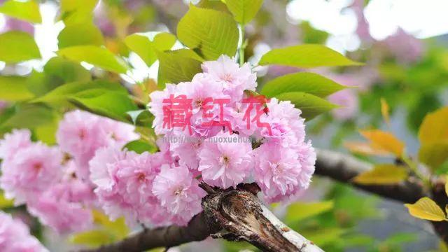 春季养生当以养肝为主,肝脏不好的症状有哪些?